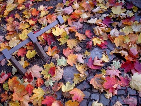 Autumnfallstargarderstrasseprenzlauerberg