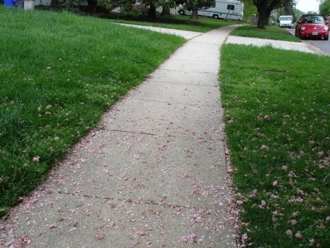 Suburbiaadesuburbmarylandpinkflowerpetalssidewalk