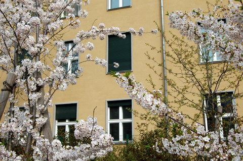 Springberlinmitterosaluxemburgplatz