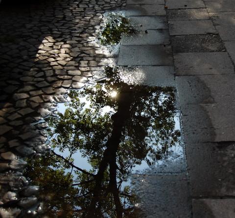 Rainsunwaterpuddleskopenhagenerstrassesummercobblestones