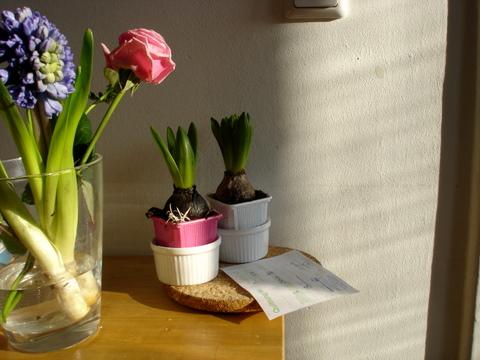 Sunlightspringflowersroseshyacinthsbulbstablejanuaryberlin