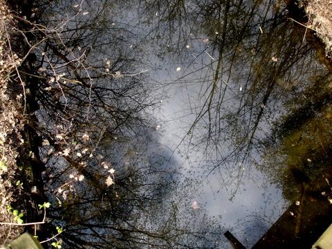 Langesluchswampberlingrunewaldnaturschutzgebietnaturepreserve