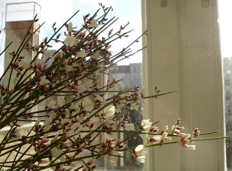 Fragrantflowers1
