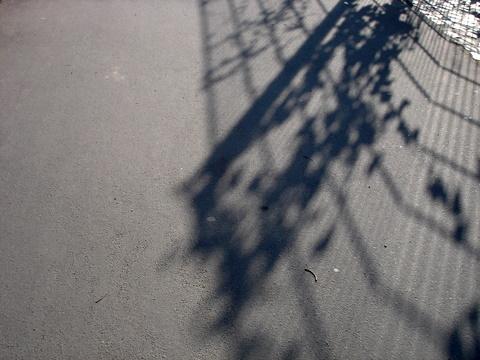 Shadowsfencepavementberlin