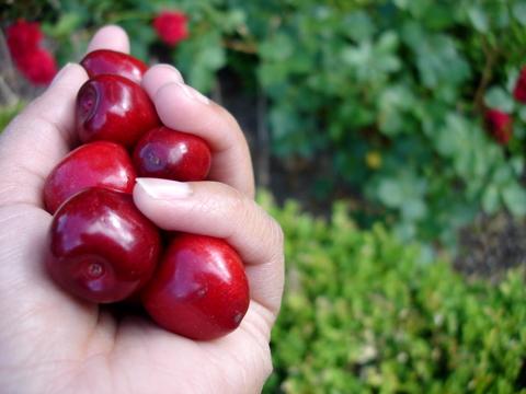 Cherrieshausamwaldsee