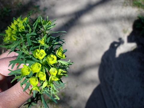 Flowerandshadow