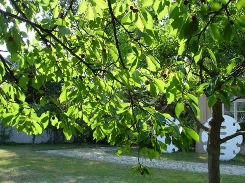 Cherrytreehausamwaldsee