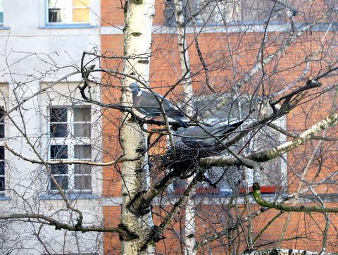 Pigeonsnestberlin