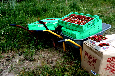 Strawberrieswheelbarrow