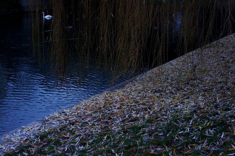 Swancanalberlin