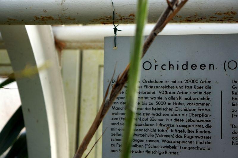Berlinbotanicgardens5