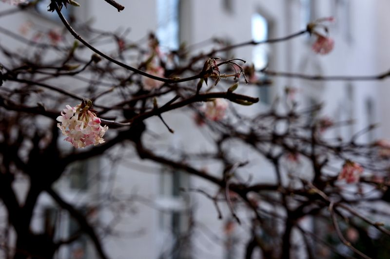 Springberln