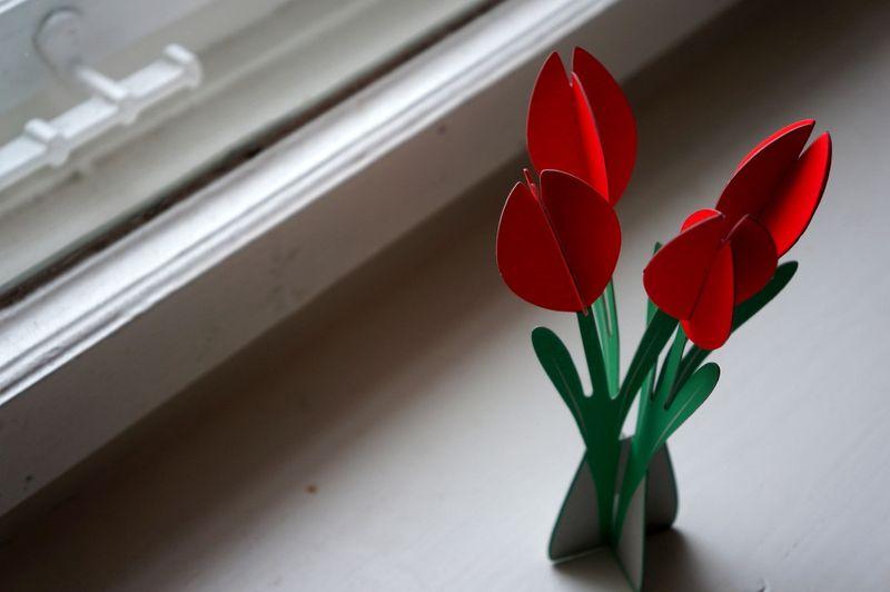 Tulipsassembled