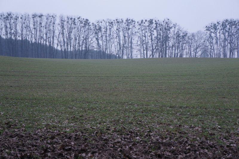 Brandenburgfields