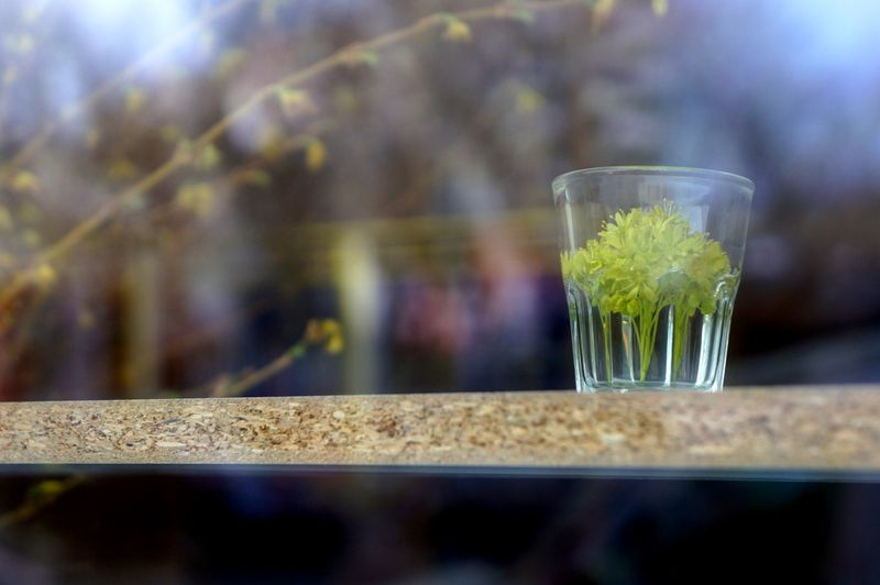 Flowersglassbrancheswindow