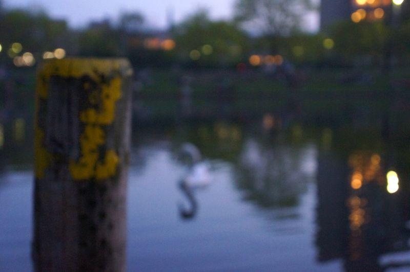 1-swan-canal