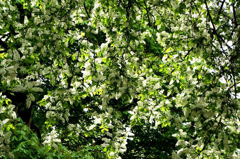 Spring-leaves-berlin