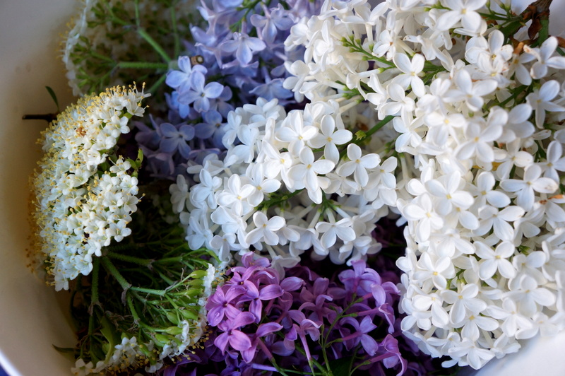 Lilacs-white-purple-elderflower