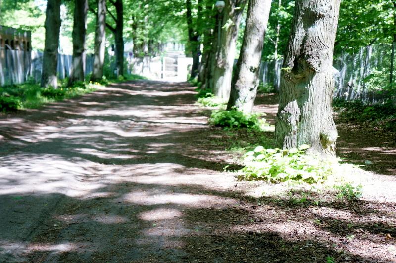 Kladow-trees