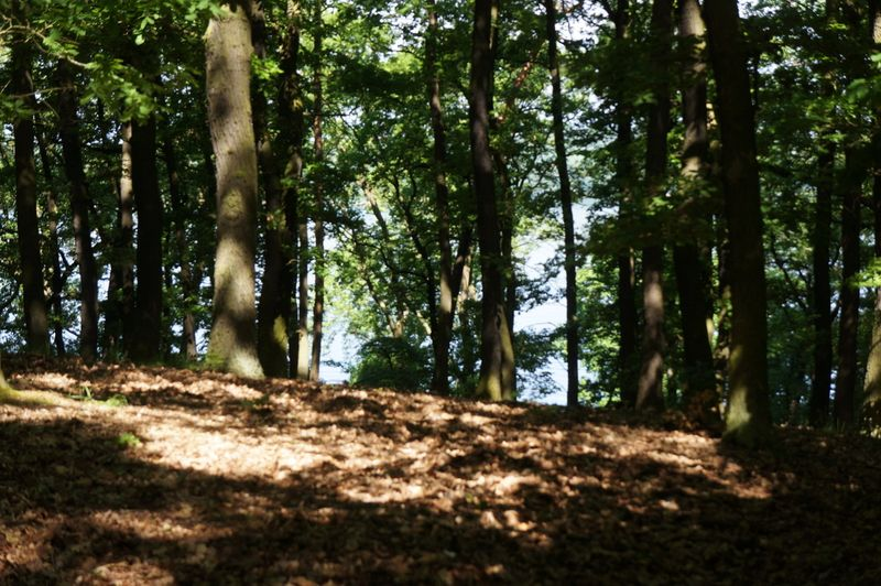 Through-the-trees-wannsee