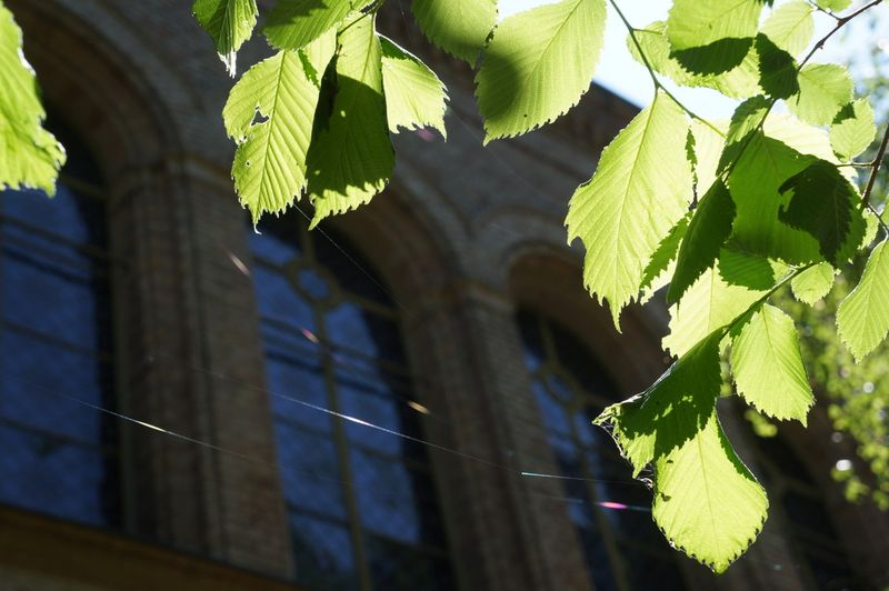 Church-green-leaves-berlin