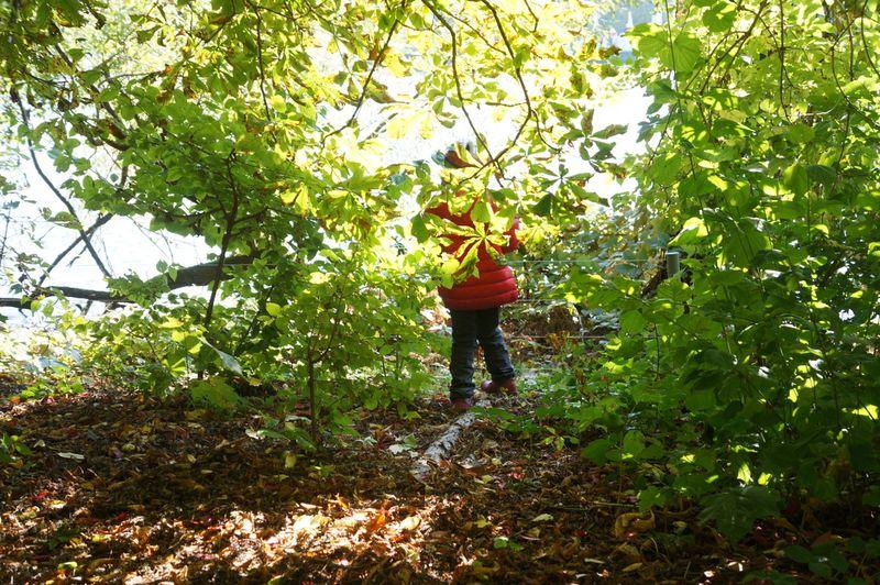 Chestnut-leaves-child