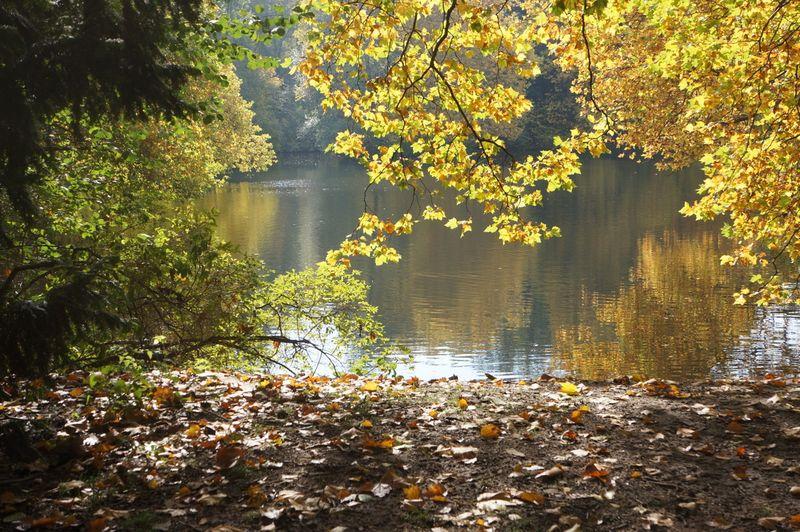 Lake-autumn-park