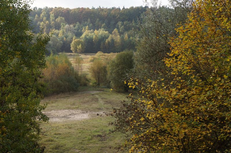 Grunewald-berlin-forest-1