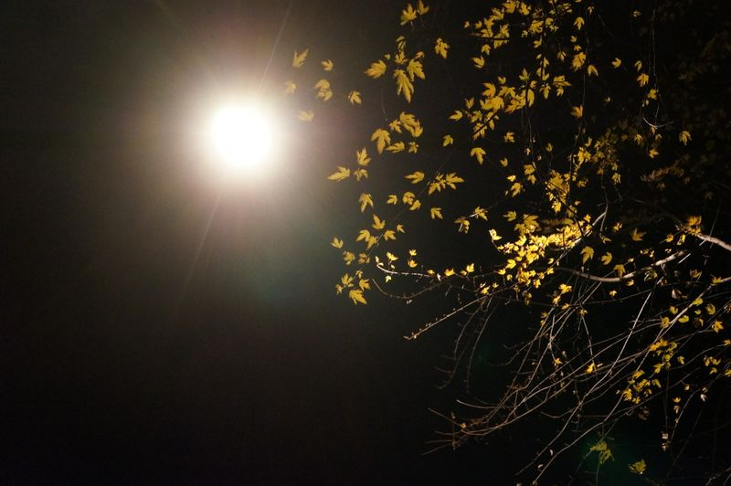 Streetlamp-leaves-close-up