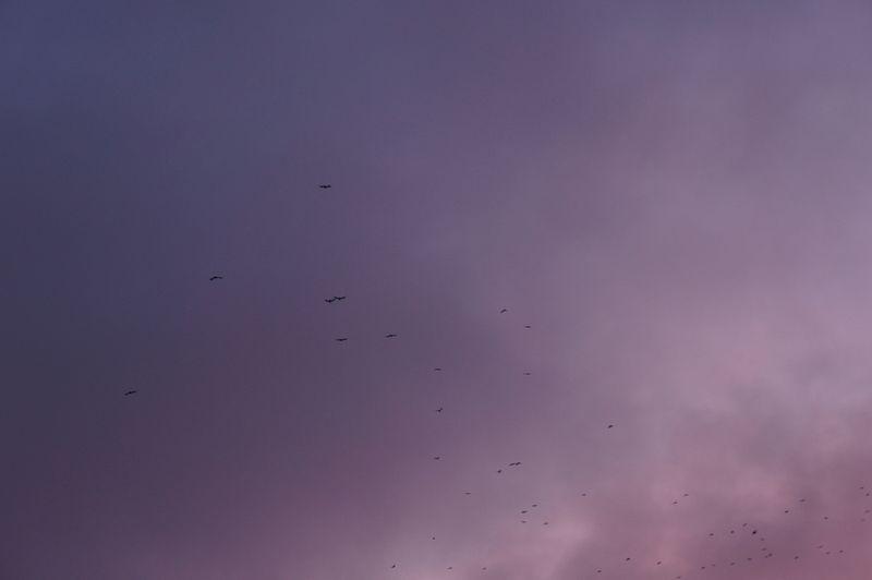 Berlin-sunset-sky-2