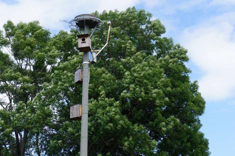 Stork-camera-linum