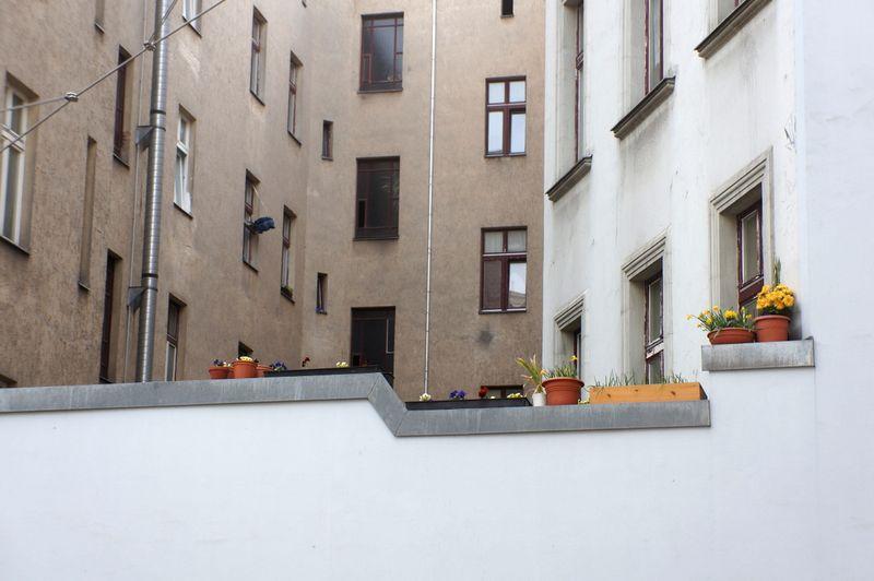 Berlin-hinterhof-blumen