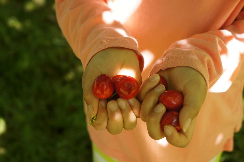 Handfuls-cherries