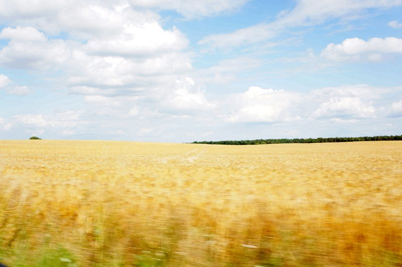 Drive-brandenburg-field