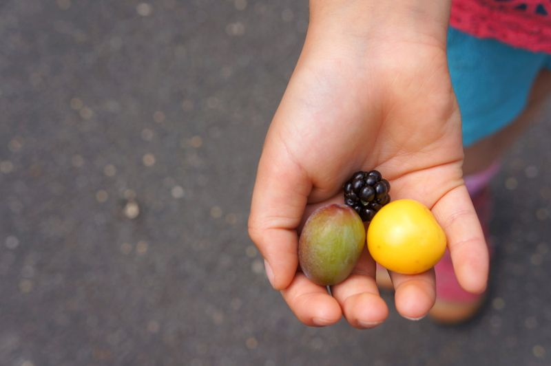 Hand-fruit-plum-berry