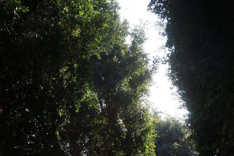 Gap-trees