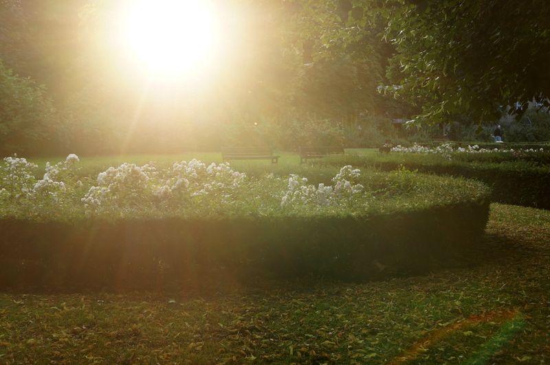 Park-sun