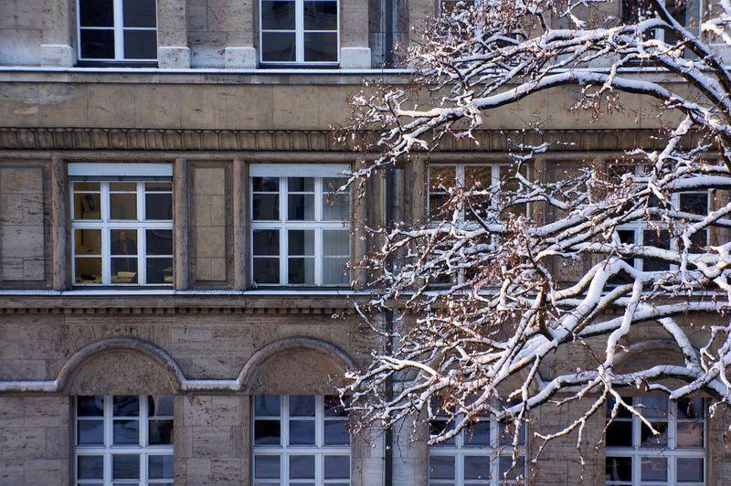 2-tree-snow