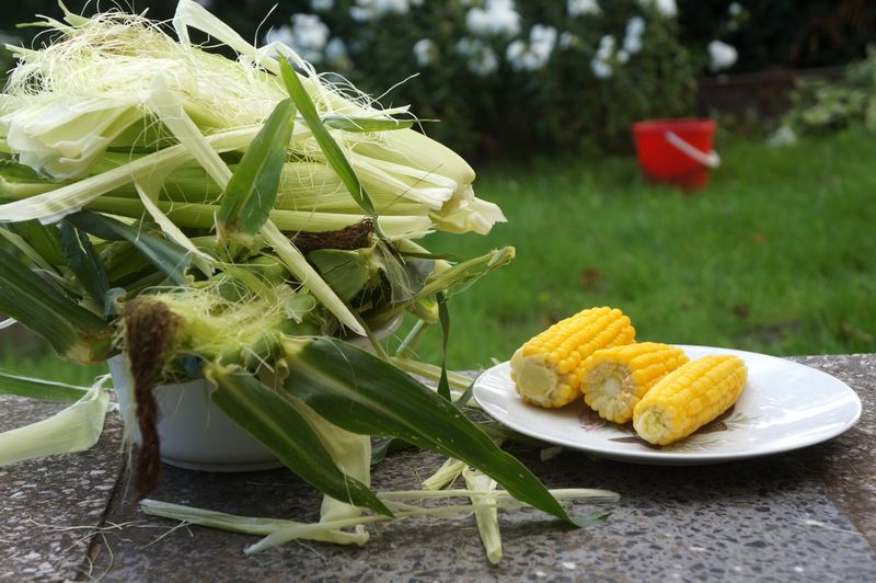 Corn-allotment-berlin